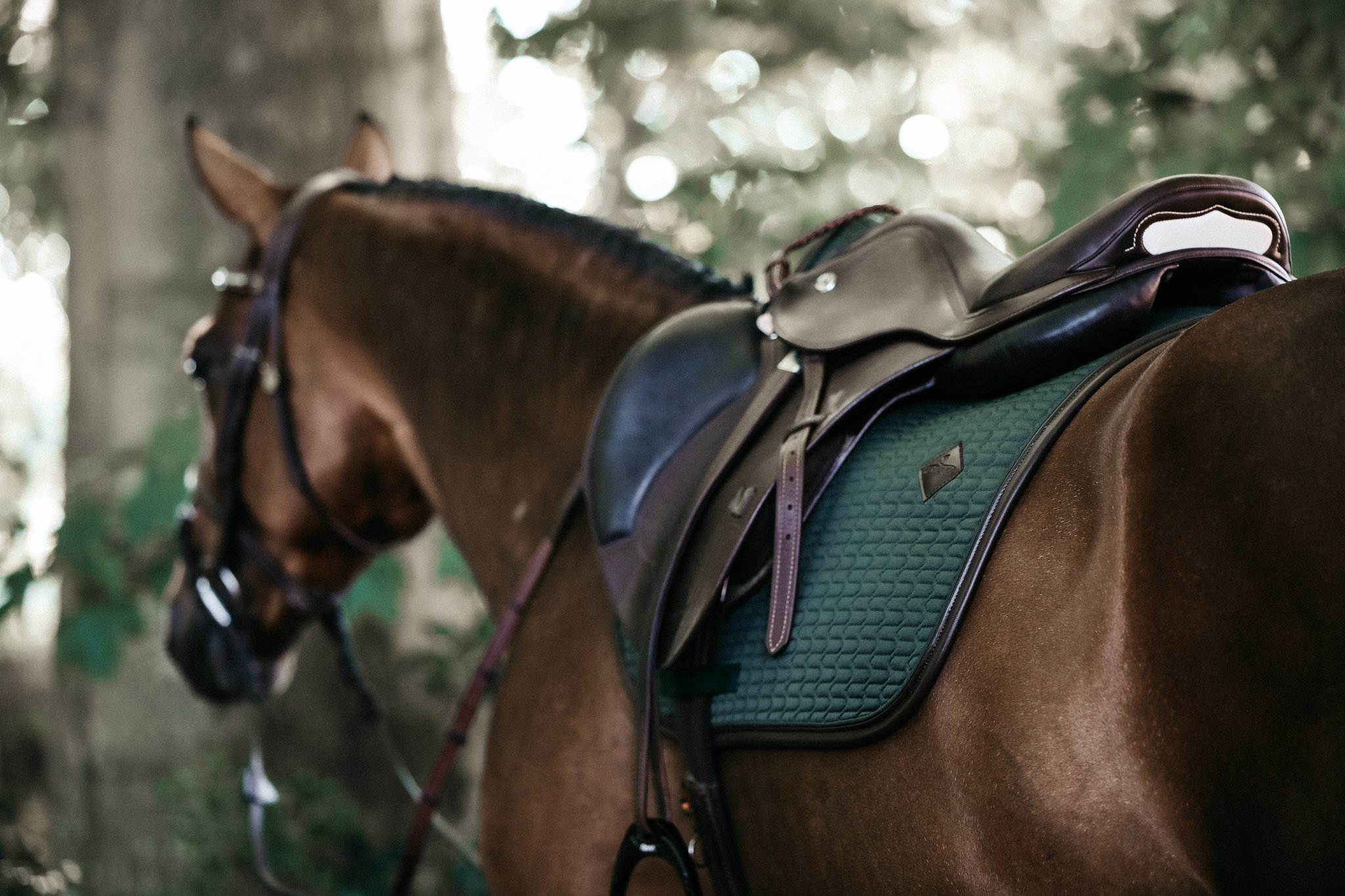 Alla Hästprodukter