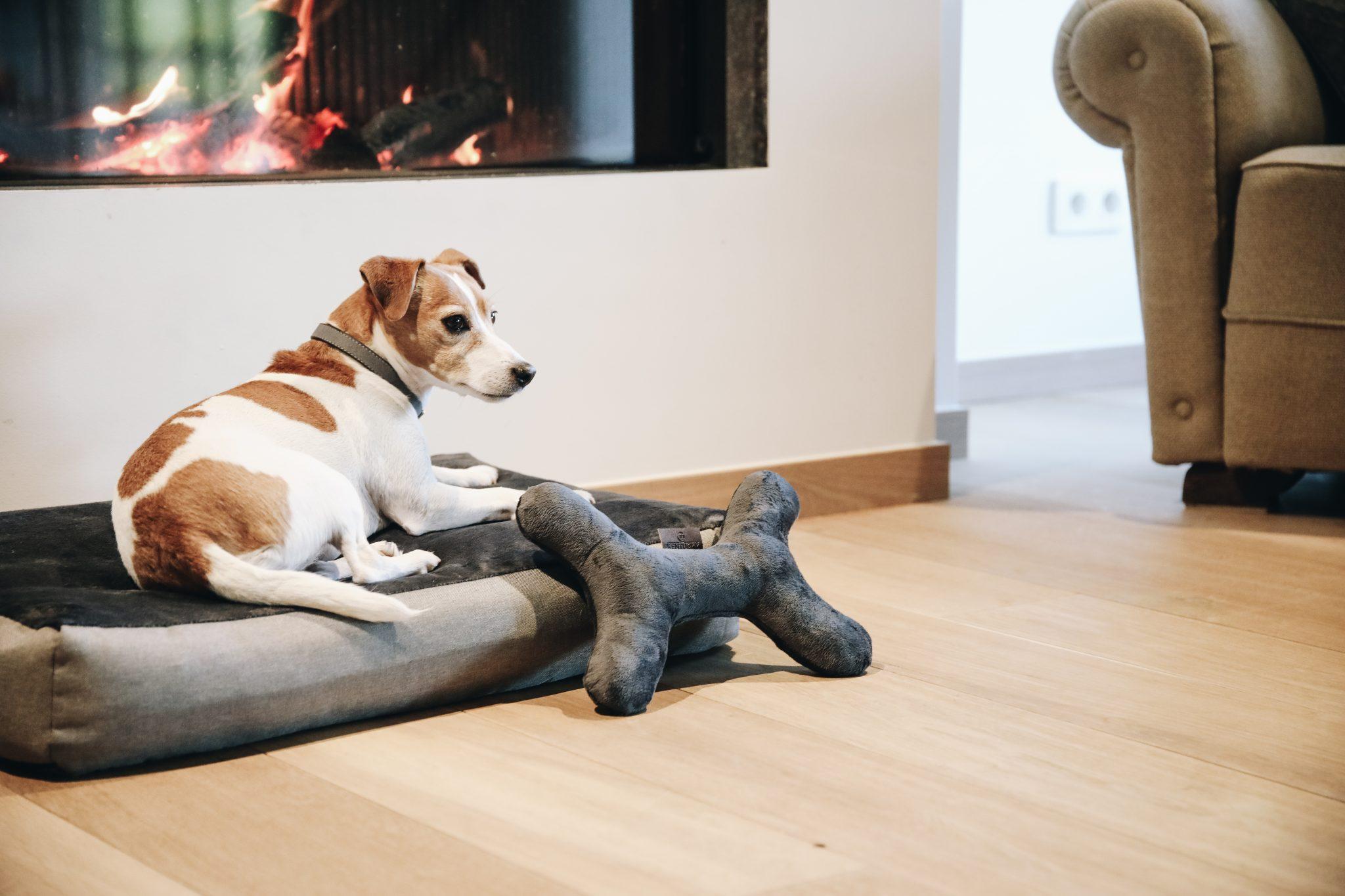 Hundleksaker & Accessoarer